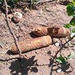 На ферме под Барановичами нашли артиллерийские снаряды времен войны