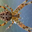 Украинцу ампутировали ноги после укуса паука