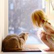 Кот провожает девочку до автобуса и встречает. Вот почему он стал ей верным другом! Почитайте, это очень трогательно!
