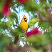 Птица с редчайшим окрасом попала в объектив камер во Флориде