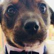 Хозяин не пришел: грустная история щенка Висента растрогала соцсети