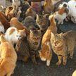 Более 300 кошек спасли из квартиры жителя Торонто