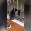 Пушистые сообщники: щенок с помощью кота сбежал из вольера и рассмешил Сеть (ВИДЕО)