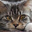 Вольнолюбивый кот сбегал от хозяев к соседке. Ревнивые владельцы выставили ей счет в целое состояние. И забрали кота