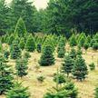«Неделя леса» начинается в Беларуси