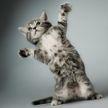 Кошка пыталась усмирить непослушного котенка. Вы только посмотрите, какой он упрямый – удивительно! (ВИДЕО)
