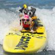 Соревнования по сёрфингу с собаками прошли в Калифорнии