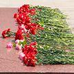 «Беларусь помнит»: масштабная акция продолжается в День Независимости