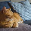 Кот скучает по хозяину и гладит лапой его фото – удивительно! (ВИДЕО)