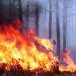 Первые лесные пожары зафиксированы в Беларуси