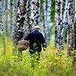 Пропавшего пенсионера третий день ищут в лесу под Пуховичами