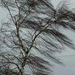 Штормовое предупреждение объявлено на 22 января: порывы ветра достигнут 20 м/с