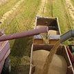 Жатва-2021: собрано более 5,5 млн тонн зерна