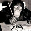 Картины шимпанзе продадут за $250 тыс.