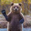 Мужчина бросил свою спутницу в лесу с медведем, а сам испугался и убежал