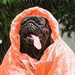 Погода остаётся прохладной: прогноз на 13 июля