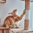 Кошка послушалась совета балерины выровнять спину. Только посмотрите на это, пушистая все понимает – удивительно! (ВИДЕО)