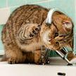 Нелепый способ кота пить воду из-под крана рассмешил соцсети