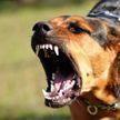 Осторожно, злая собака! Советы кинологов, как защитить себя от агрессивной собаки