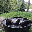 Медведь пристрастился к купанию в ванной в зоопарке