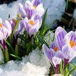 8 марта температурные рекорды были побиты почти во всех областных городах Беларуси