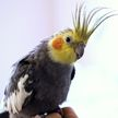 60 умирающих попугаев упали с неба на головы школьникам в Австралии