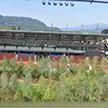 Лес на футбольном стадионе: в Австрии появилась необычная инсталляция