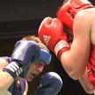Чемпионат Беларуси по боксу: соревнования проходят в Молодечно