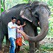 Самый старый слон умер в Индии