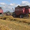 Ливни и грозы в разгар уборочной: как белорусские аграрии сражаются за урожай в непогоду