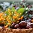 Какие ягоды и фрукты необходимо есть в августе