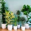 Опасные комнатные растения, которые наверняка есть у вас дома