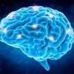 Названа главная угроза для мозга человека