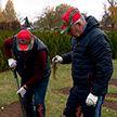 В Минске из кустов барбариса высадили слово «Беларусь»