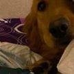 Собака съела паспорт хозяйки, заставив ее отменить поездку в Ухань за несколько дней до смертельной вспышки коронавируса