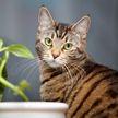 Хозяева решили обмануть своего кота, но их план с треском провалился. Только посмотрите на реакцию пушистого – он достоин аплодисментов!