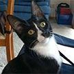 В Австралии кошку постирали в стиральной машине. Она выжила