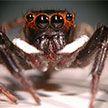 Огромный паук испугал жителей немецкого города и стал причиной вызова полиции