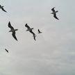 Ветеринар рассказал, как животные и птицы находят дорогу домой