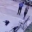Ворона утащила деньги из рюкзака парня, которые он накануне украл у 52-летней женщины (ВИДЕО)