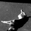 Жуткое преступление: собаку выбросили с многоэтажки в Гомеле