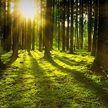 21 марта отмечают Международный день лесов