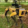 Робот Spot в парке Сингапура следит, как люди соблюдают дистанцию