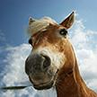 Прискакал за добавкой. В Киргизии мужчина верхом на лошади заехал в магазин (Видео)