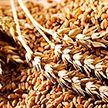 Один миллион тонн зерна намолотила Минская область