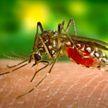 Когда комариные укусы опасны для организма? Рассказывает дерматолог