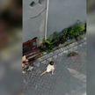 Обезьяна в Индонезии попыталась украсть ребенка (ВИДЕО)