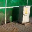 Мужчина бросил бутылку с горючей жидкостью в электроящик в Осиповичах (ВИДЕО)