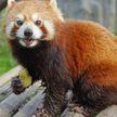 Знаменитые зоопарки мира предлагают онлайн-посещения