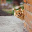 Вот как эмоционально кот каждый день встречает хозяйку с работы! Такого вы еще не видели! (ВИДЕО)